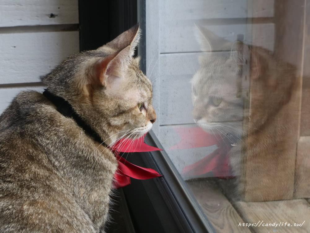 20180916100813 14 - 來森もり隱身在巷弄裡的老宅甜點店,裝潢超好拍,還有可愛店貓幫忙招呼大家唷~