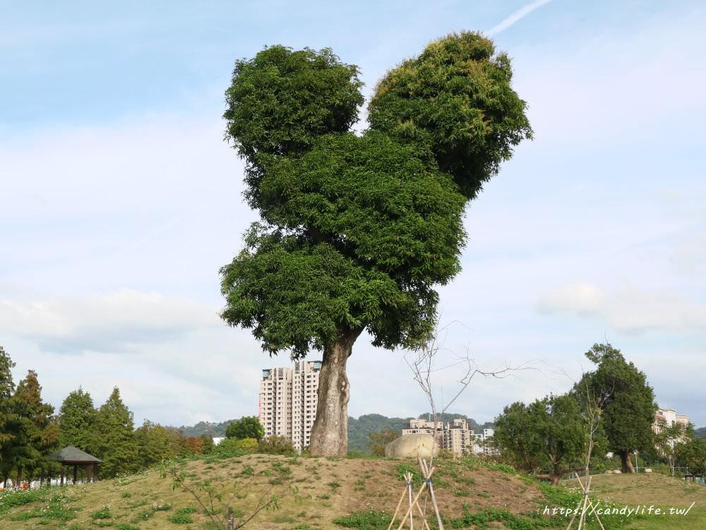 20181204172831 51 - 超可愛米奇樹就在台中萬坪公園,還有美麗的落羽松步道~
