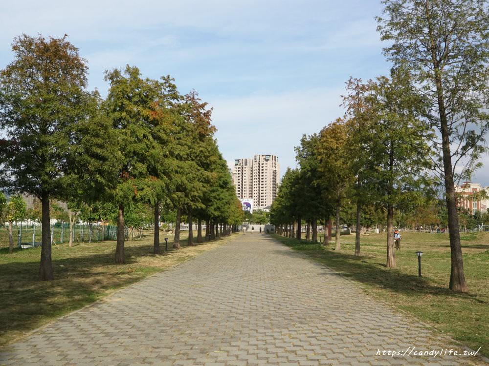 20181204172837 61 - 超可愛米奇樹就在台中萬坪公園,還有美麗的落羽松步道~