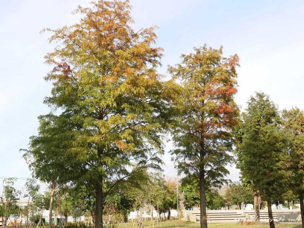 20181204172843 72 - 超可愛米奇樹就在台中萬坪公園,還有美麗的落羽松步道~
