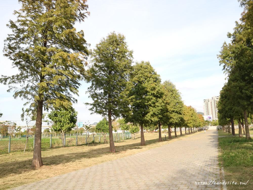 20181204172846 20 - 超可愛米奇樹就在台中萬坪公園,還有美麗的落羽松步道~