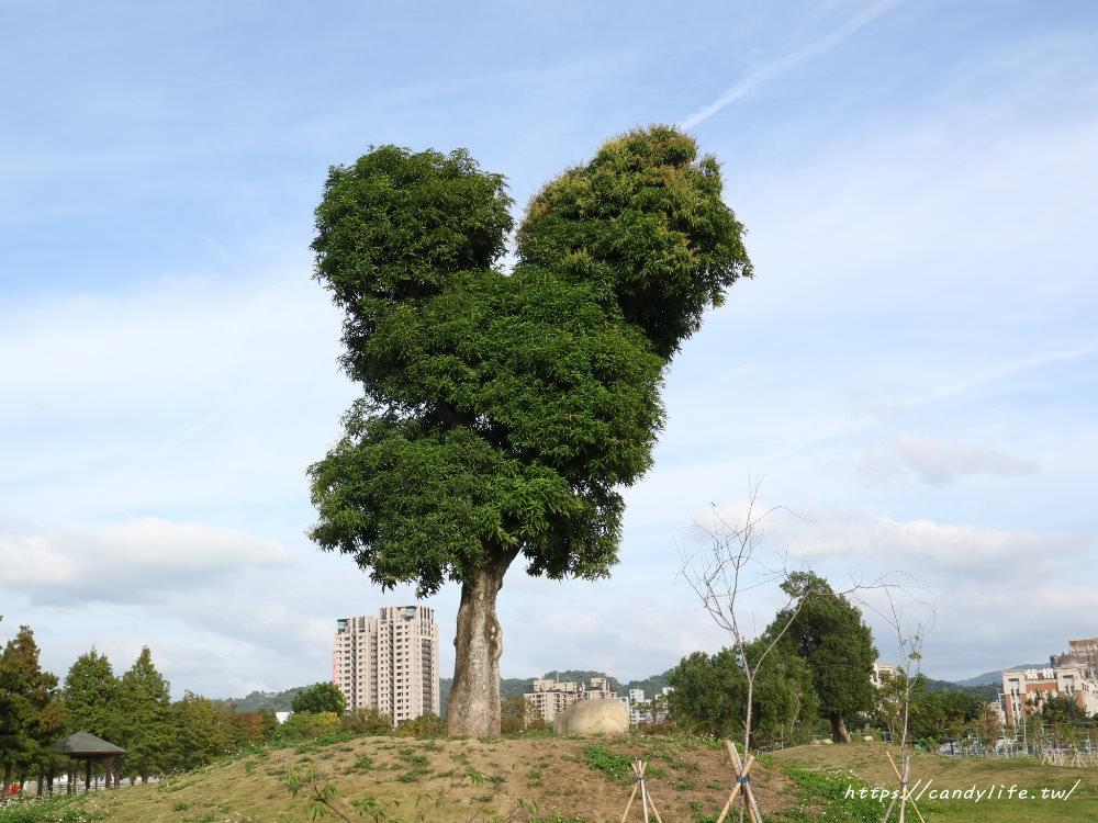 20181204172851 30 - 超可愛米奇樹就在台中萬坪公園,還有美麗的落羽松步道~