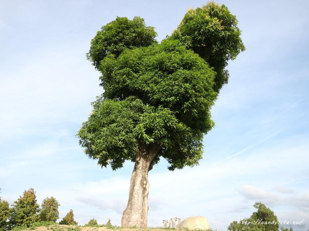 20181204172907 73 - 超可愛米奇樹就在台中萬坪公園,還有美麗的落羽松步道~