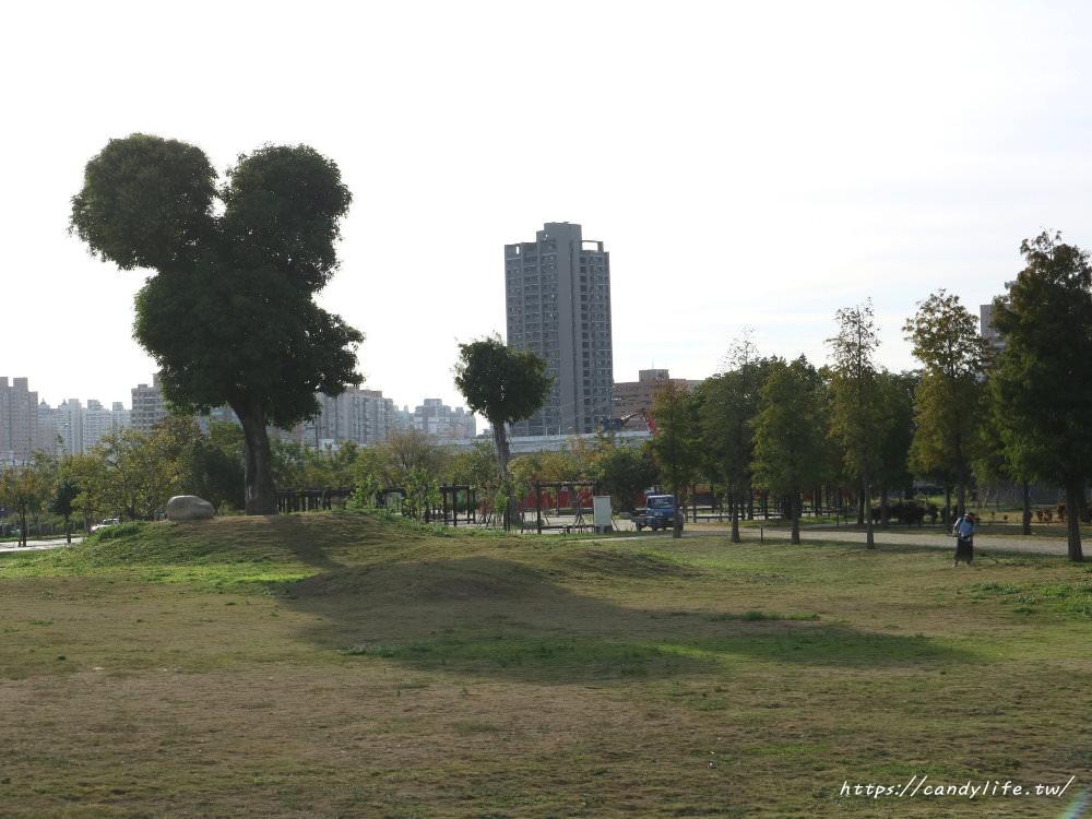 20181204172911 37 - 超可愛米奇樹就在台中萬坪公園,還有美麗的落羽松步道~