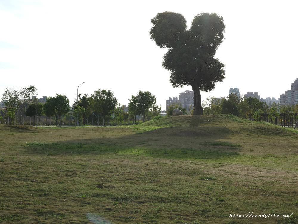 20181204172916 33 - 超可愛米奇樹就在台中萬坪公園,還有美麗的落羽松步道~