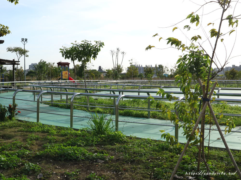 20181204172933 87 - 超可愛米奇樹就在台中萬坪公園,還有美麗的落羽松步道~