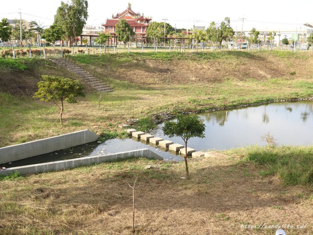 20181204172944 75 - 超可愛米奇樹就在台中萬坪公園,還有美麗的落羽松步道~