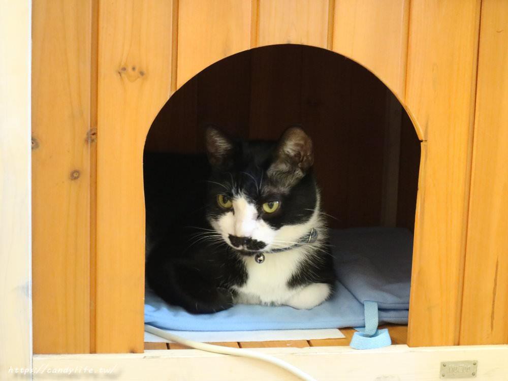 20190419230919 87 - Glocke Bakery G貓甜點,結合貓咪中途之家的甜點店,甜點好吃,還有可愛的貓咪作伴~