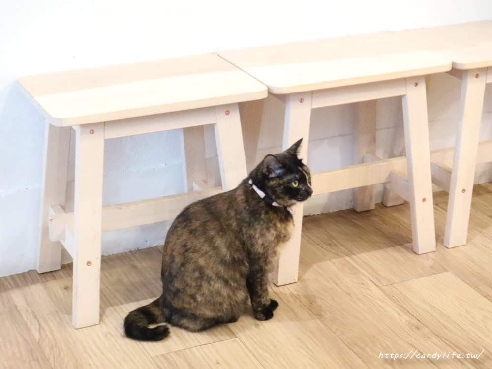 20190419230920 67 - 結合貓咪中途之家的甜點店,甜點好吃,還有可愛的貓咪作伴~